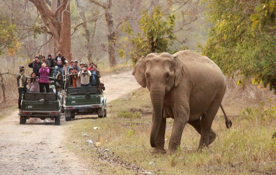 elephant-crossing-the Rajaji (India Thrills)
