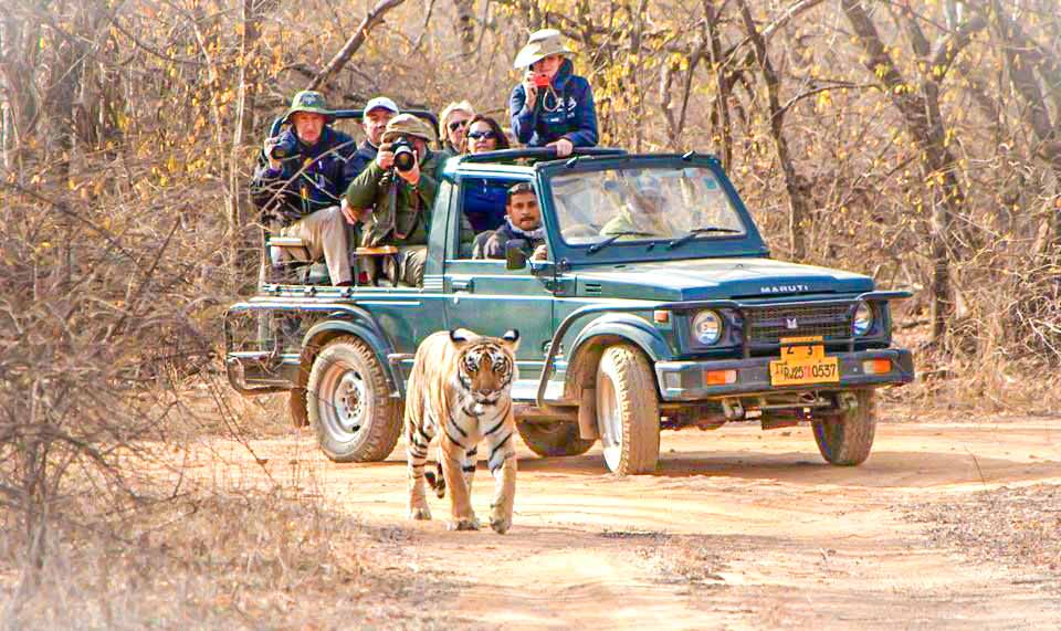 Jungle Jeep Safari In Ranthambore National Park